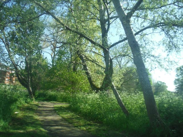 Walk in nature to avoid burnout
