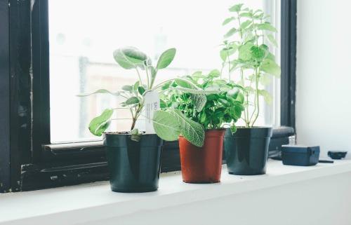 Plants on office window2_honouringvalues