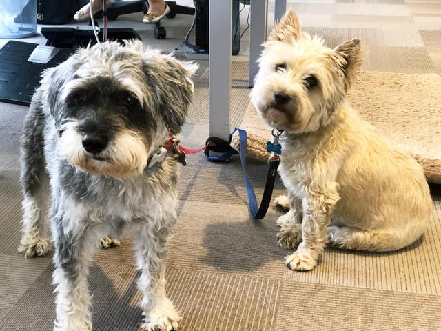 dogs - fun at work