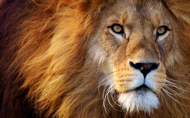 Lion. Own your strengths and soar.